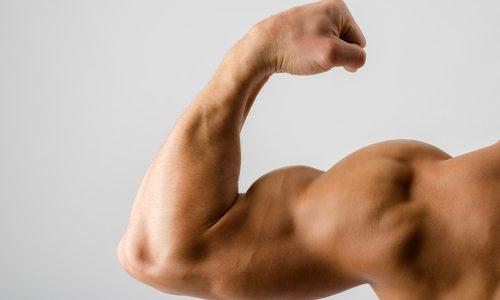 【力こぶが浮き出る】上腕二頭筋の筋トレメニュー10選|自重やマシン使用のタイプ別!最短でかっこいい腕を目指す鍛え方