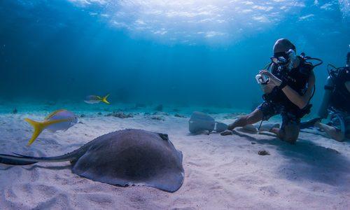 水中カメラおすすめランキング12選|初心者からプロレベルまで!ダイビングの感動を鮮やかに伝える人気商品